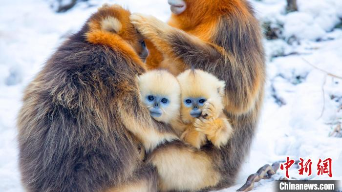 湖北神农架夏季普查发现陆生野生动物318种